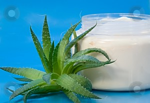 Aloe Vera Cream 300x206 APA ITU PSORIASIS