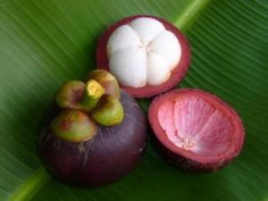 buah dan kulit manggis 300x225 KULIT MANGGIS KHASIAT ANTI KANKER MENYEMBUHKAN ANEKA PENYAKIT