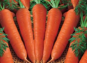 wortel Carrot 300x217 MANFAAT WORTEL ANTI KANKER ANTI OKSIDAN ANTI PENUAAN ANTI HIPERTENSI