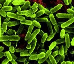 gambar prebiotik dan probiotik APA ITU PREBIOTIK PROBIOTIK DAN MANFAATNYA BAGI KESEHATAN