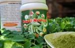 JUAL MANFAAT KELOR SUPER ANTIOKSIDAN SUPER NUTRISI ASAM URAT ANTI KOLESTEROL