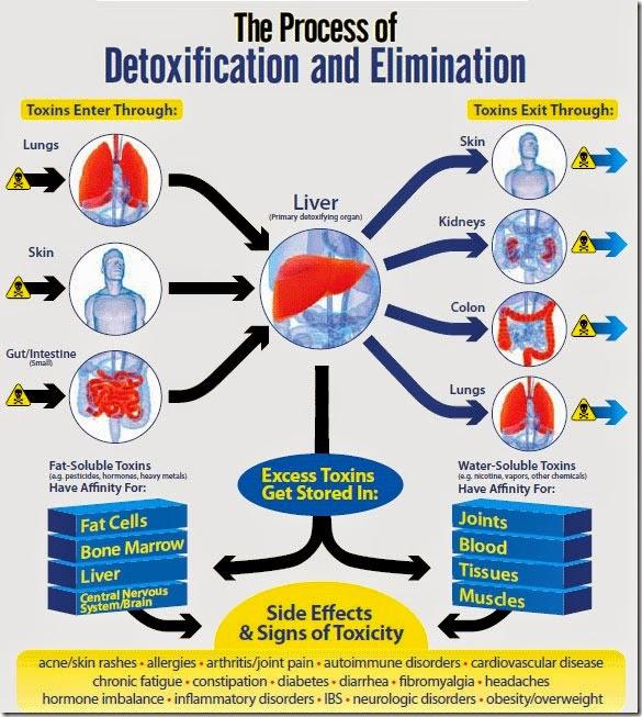 detoxifikasi usus besar dengan detox alami enema kopi HEALTHYCAFF